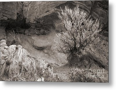 Sagebrush On Polecat Bench Metal Print by Janeen Wassink Searles