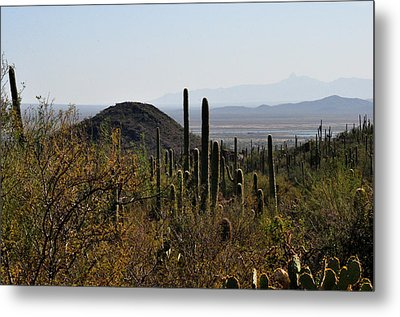 Saguaro Cactus And Valley Metal Print by Diane Lent