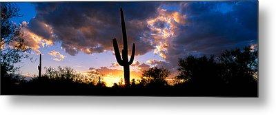 Saguaro Cactus, Sunset, Tucson Metal Print by Panoramic Images