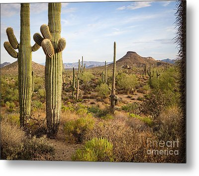 Metal Print featuring the photograph Saguaro Twins by Marianne Jensen