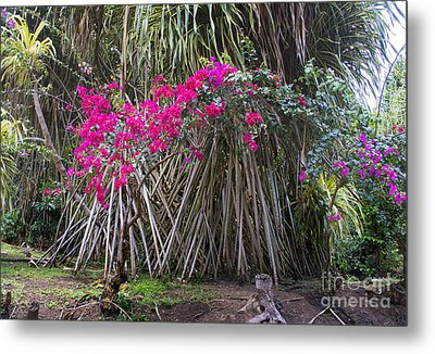 Saint Lucian Plantation Metal Print