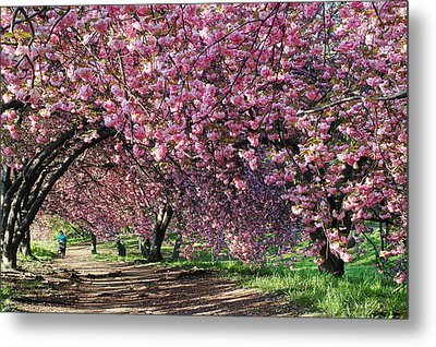 Sakura In Central Park Metal Print
