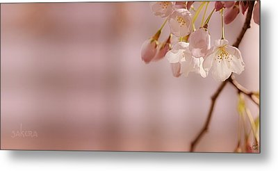 Sakura Metal Print by Lisa Knechtel