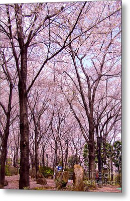 Metal Print featuring the photograph Sakura Tree by Andrea Anderegg