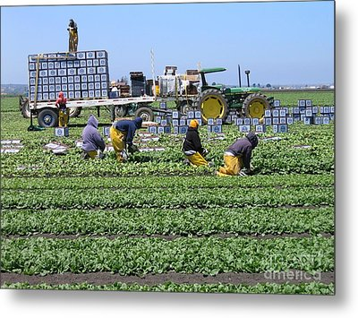 Metal Print featuring the photograph Salinas Farmworkers by James B Toy
