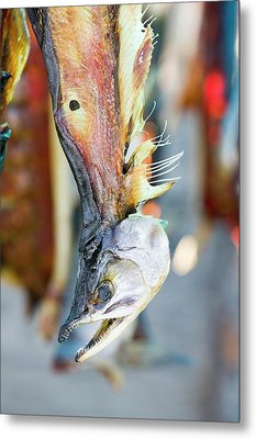Salmon Caught By Eskimo Fishermen Metal Print