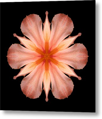 Salmon Daylily I Flower Mandala Metal Print by David J Bookbinder