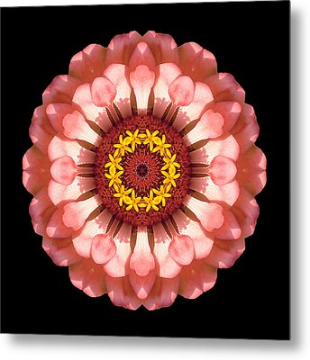 Salmon Zinnia Elegans Iv Flower Mandala Metal Print by David J Bookbinder