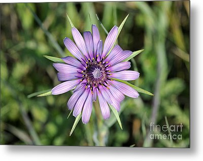 Metal Print featuring the photograph Salsify Flower by George Atsametakis