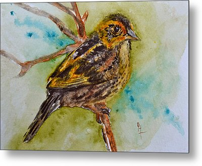 Saltmarsh Sparrow Metal Print by Beverley Harper Tinsley