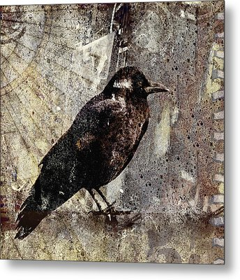 Same Crow Different Day Metal Print