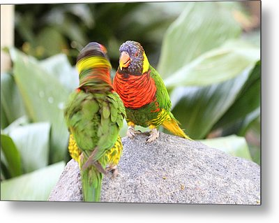 San Diego Zoo - 1212341 Metal Print by DC Photographer