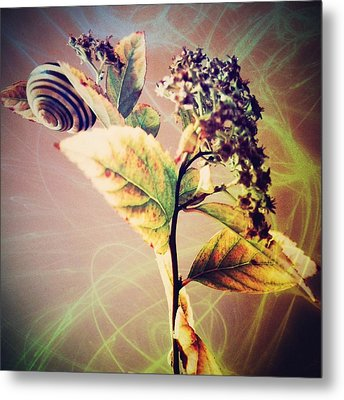 Sanction 11 Metal Print by CD Good
