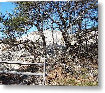 Sand Dune With Trees Metal Print by Catherine Gagne