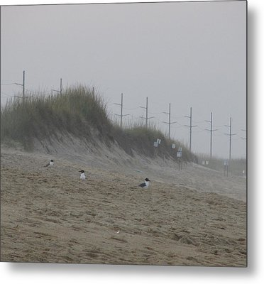 Metal Print featuring the photograph Sand Dunes And Seagulls by Cathy Lindsey