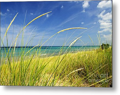 Sand Dunes At Beach Metal Print by Elena Elisseeva