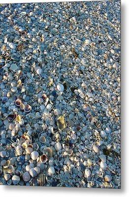 Metal Print featuring the photograph Sand Key Shells by David Nicholls
