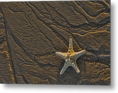 Sand Prints And Starfish  Metal Print by Susan Candelario