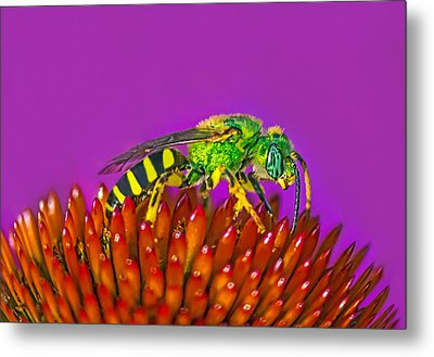 Sand Wasp Metal Print by Marion Johnson