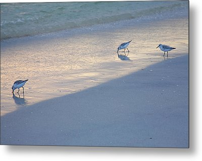 Sanderlings At Dusk I  Metal Print by Steven Ainsworth