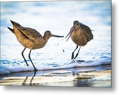 Metal Print featuring the photograph Sanderlings Playing At The Beach by John Wadleigh
