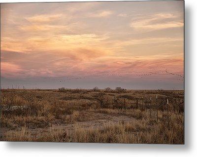 Sandhill Cranes At Sunset Metal Print by Melany Sarafis
