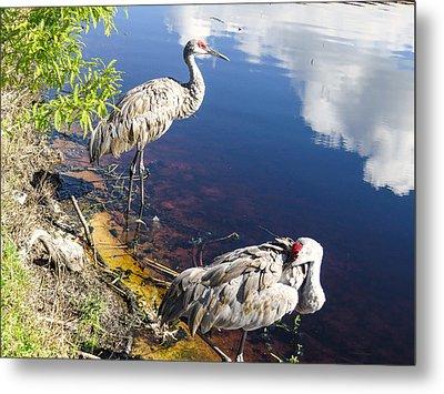 Sandhill Cranes At The Lake Metal Print by Zina Stromberg