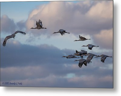 Sandhill Cranes Metal Print by Beverly Parks