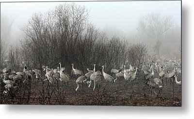 Sandhill Cranes In The Fog Metal Print