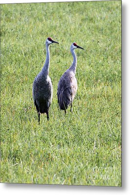 Metal Print featuring the photograph Sandhill Cranes In Wisconsin by Debbie Hart