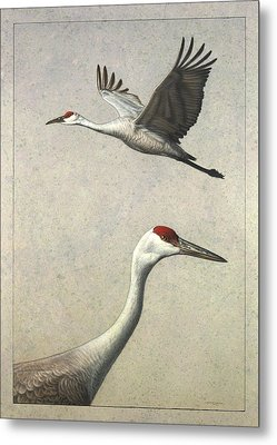 Sandhill Cranes Metal Print by James W Johnson