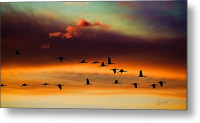 Sandhill Cranes Take The Sunset Flight Metal Print