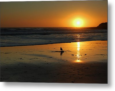 Sandpiper At Natural Bridges Santa Cruz Metal Print