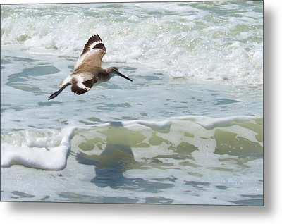 Sandpiper Flight Metal Print