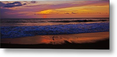 Metal Print featuring the photograph Sandpiper On The Beach by John Harding
