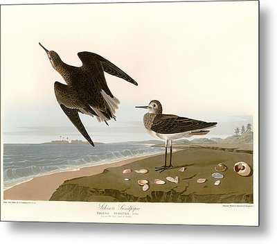 Sandpipers On The East Coast Of Florida Metal Print by Mountain Dreams