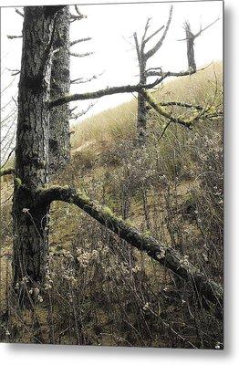 Sandy Hillside Metal Print by Adria Trail