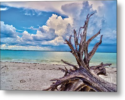 Sanibel Island Driftwood Metal Print by Timothy Lowry