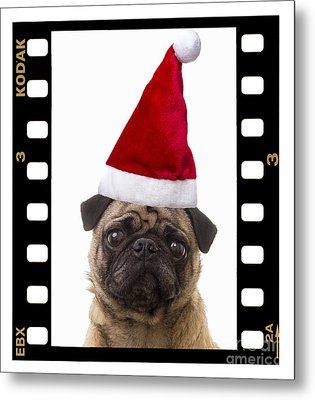 Santa Pug - Canine Christmas Metal Print by Edward Fielding