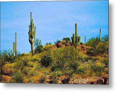 Sargaro Cactus And Flowers Metal Print by Richard Jenkins