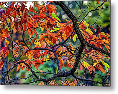 Metal Print featuring the photograph Sassafras Leaves by Skip Tribby