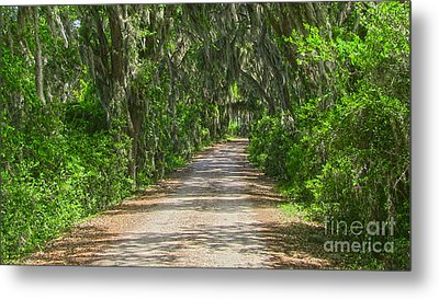 Savannah Country Road Metal Print by D Wallace