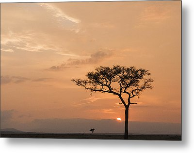 Savannah Dawn Metal Print by Phyllis Peterson