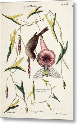 Savannah Sparrow And Cicada Metal Print
