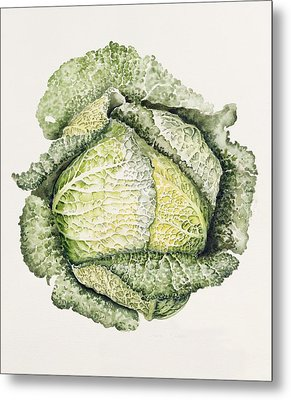 Savoy Cabbage  Metal Print by Alison Cooper