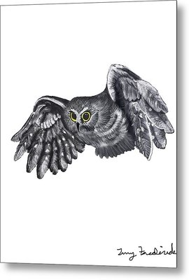 Metal Print featuring the drawing Saw-whet Owl by Terry Frederick