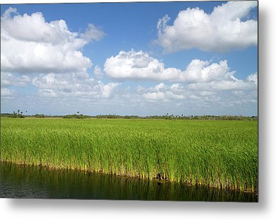 Sawgrass In The Florida Everglades Metal Print by David R. Frazier