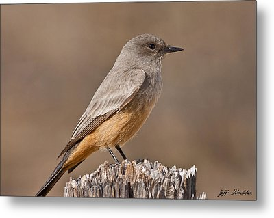 Say's Phoebe On A Fence Post Metal Print by Jeff Goulden