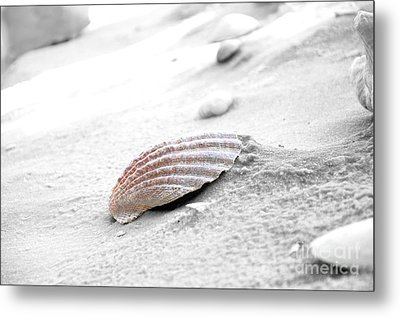 Metal Print featuring the photograph Scallop Shell by Robert Meanor