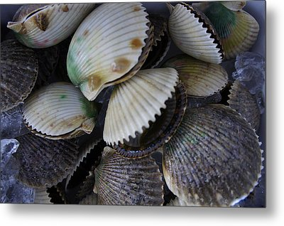 Scallops Metal Print by Laurie Perry